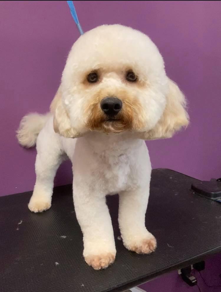 Bettsys groom room dog gallery