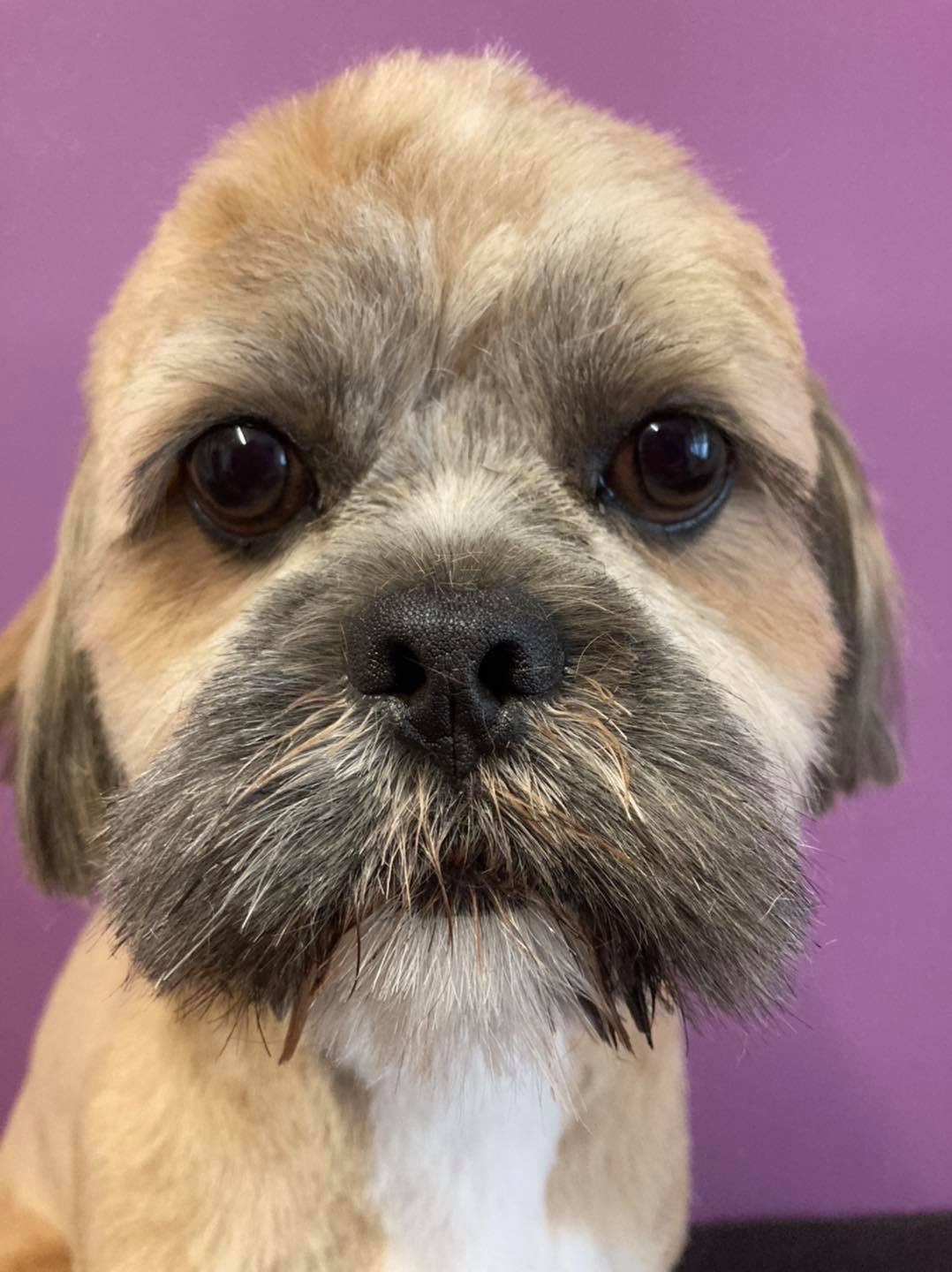 best dog groomers in selby area