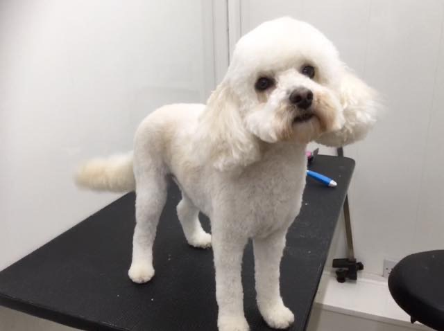 bettsys groom room gallery Gallery for dog groomwers