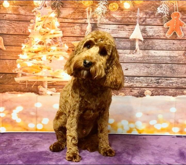 doggy pet gallerg selby