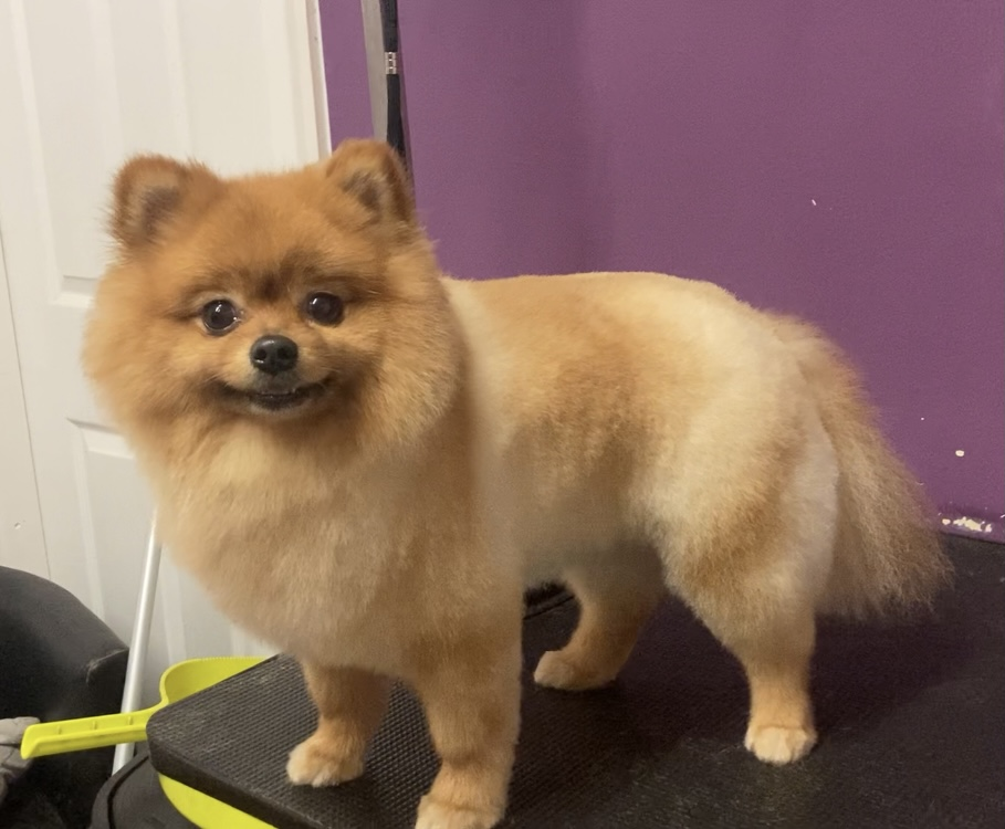 selby dog grooming services